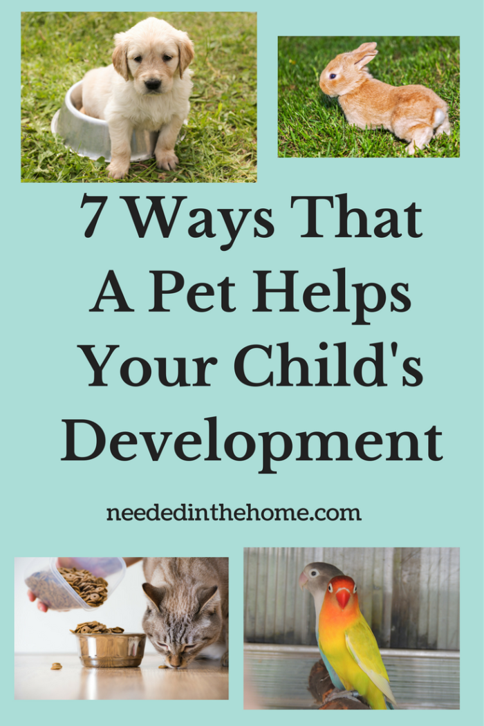 puppy in dish baby bunny cat being fed beautiful pet birds 7 ways that a pet helps your child's development
