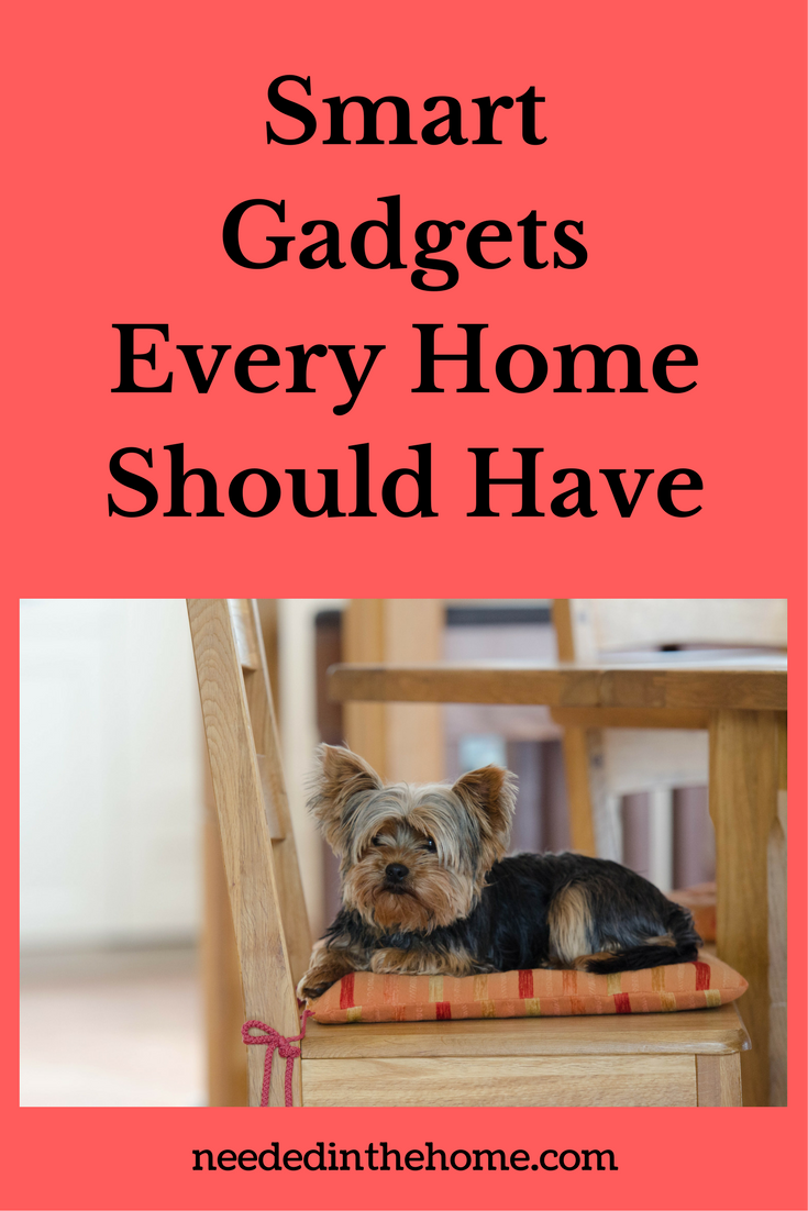 dog at home on a chair Smart Gadgets Every Home Should Have