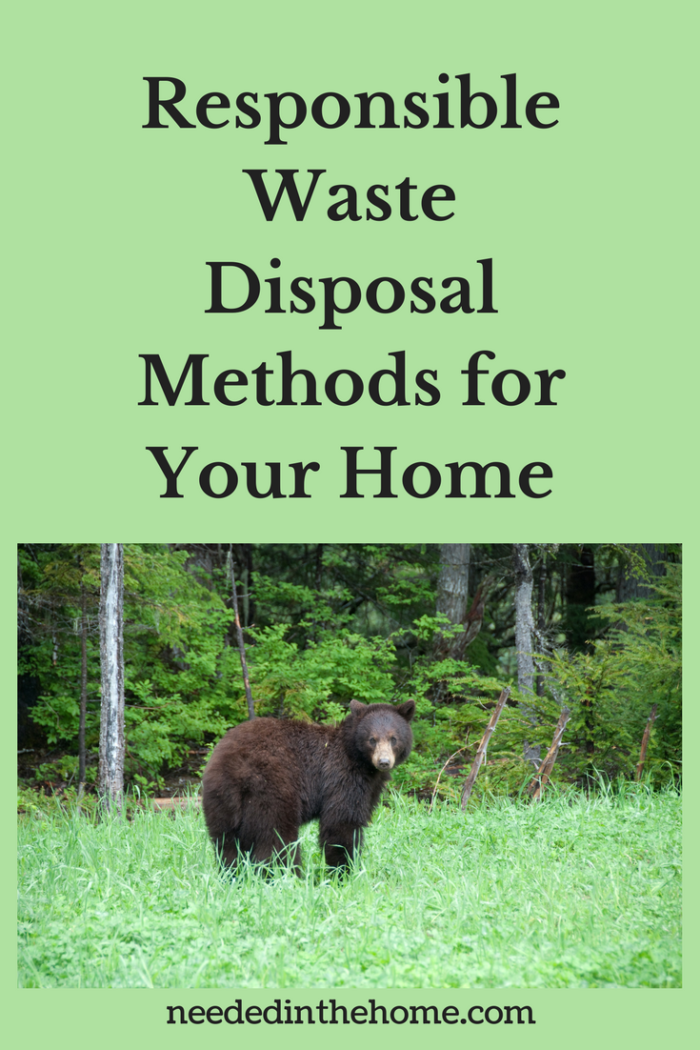 brown bear standing on grass near forest Responsible Waste Disposal Methods for Your Home neededinthehome.com