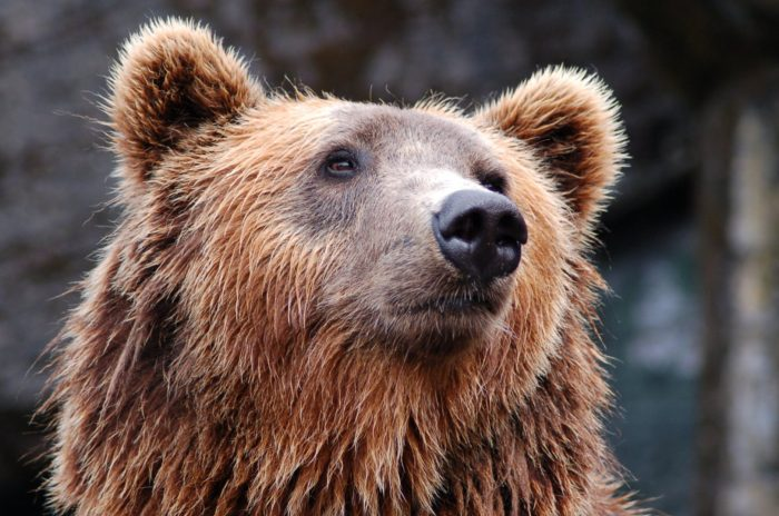 brown bear responsible waste disposal for your home