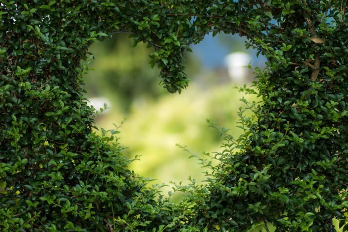 heart cut within hedges greenery make your home more eco-friendly this year