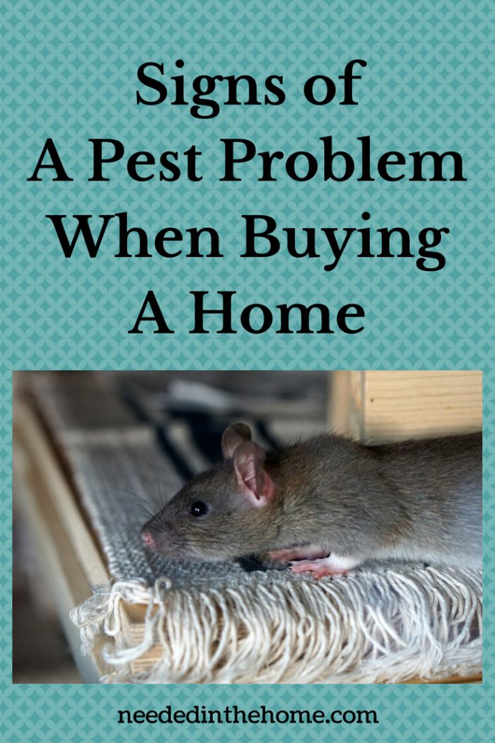Pest Problem Signs of A Pest Problem When Buying A Home mouse on a rug in a house you are looking to buy neededinthehome