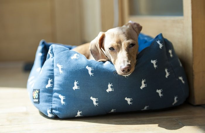 Help your new dog feel at home in your house dog laying on a comfy dog bed