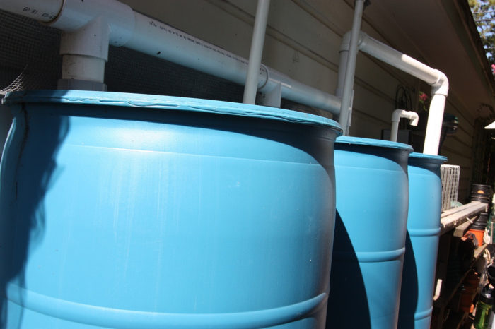 Off Grid Water collection in blue plastic rain barrels