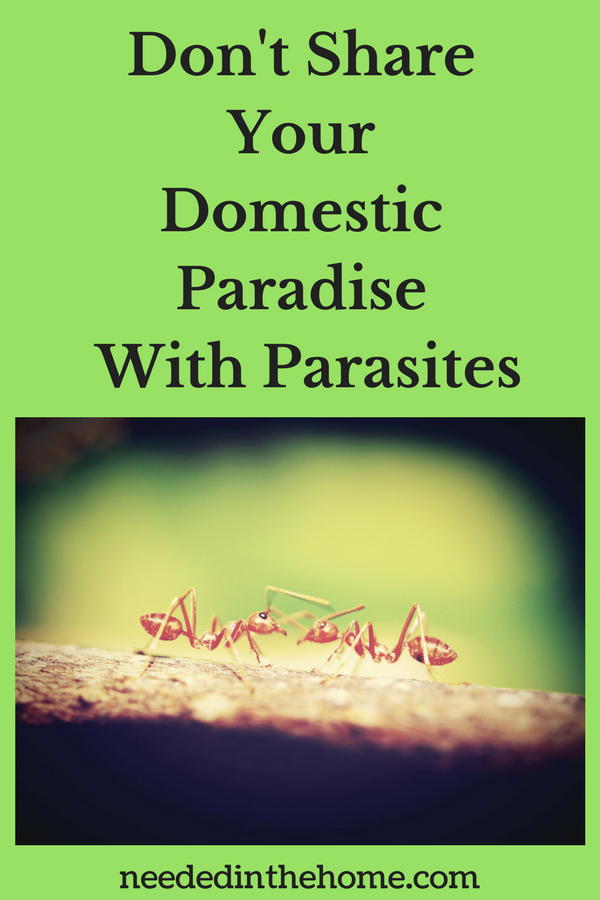 Don't Share Your Domestic Paradise With Nasty Parasites This Spring ants neededinthehome