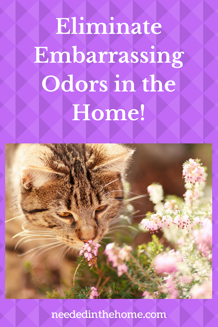 Eliminate Embarrassing Odors in the Home! tabby cat smelling flowers neededinthehome