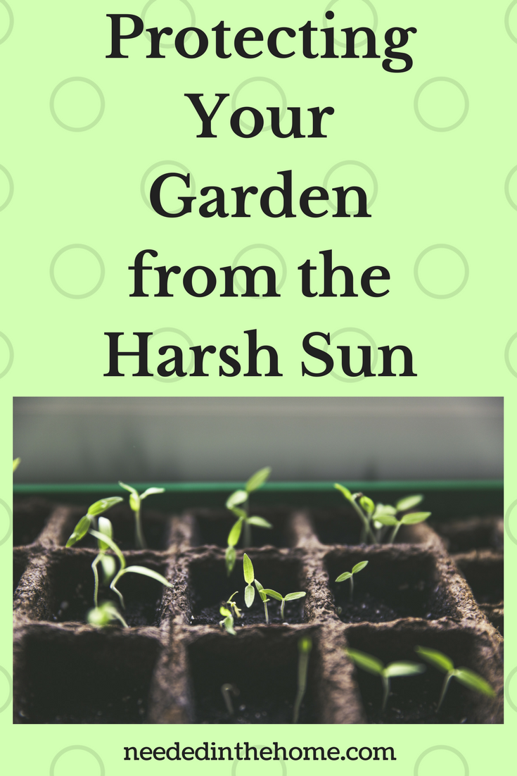 Protecting Your Garden from the Harsh Sun little baby plants growing in dirt neededinthehome