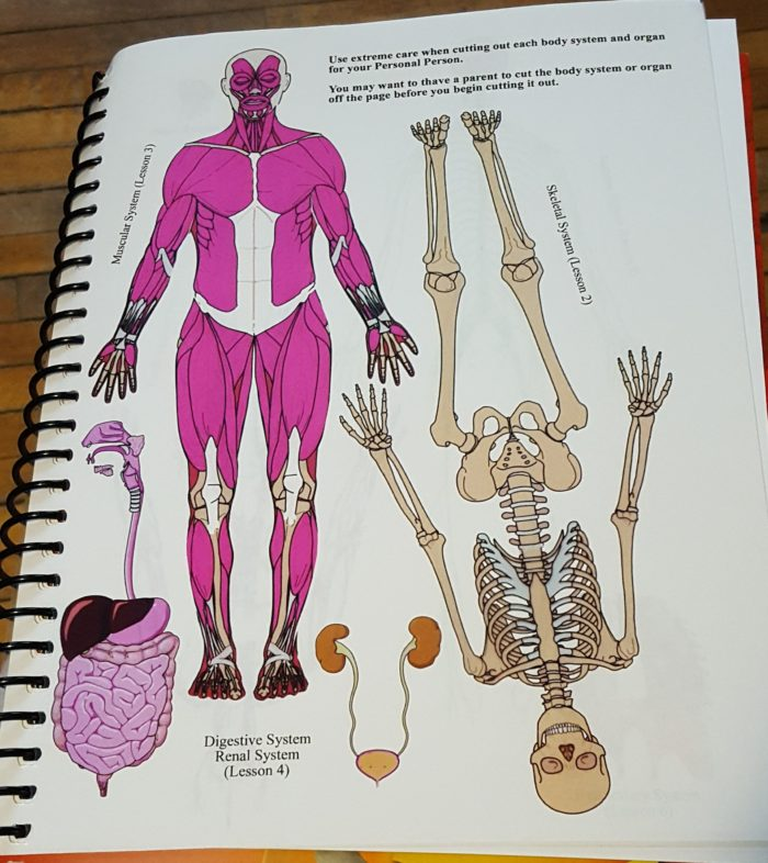 Review of Exploring Creation with Human Anatomy cut out project page of skeleton muscular system digestive system renal system