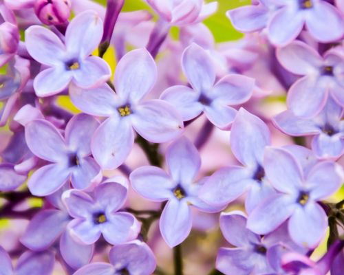 Summer's Coming - Get your family and home ready for the summer heat lilacs