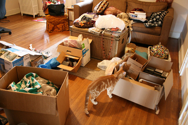Moving house image cat in a room full of partially packed boxes and furniture