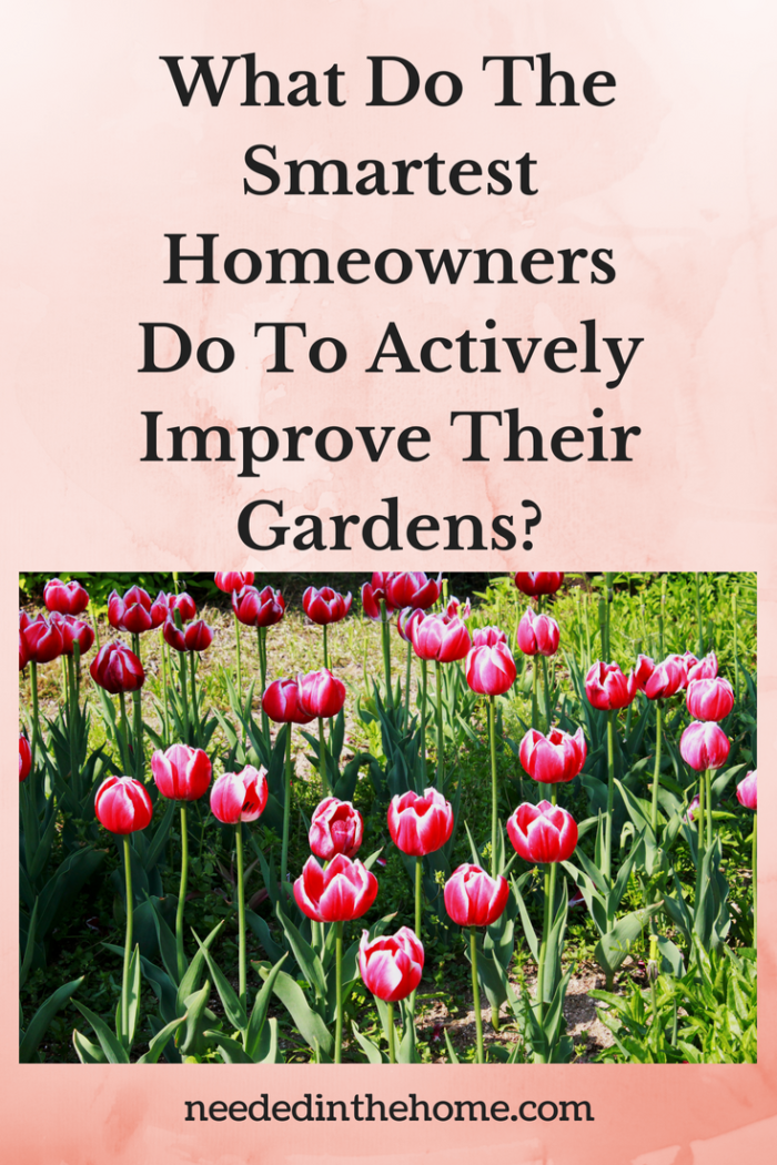 What Do The Smartest Homeowners Do To Actively Improve Their Gardens? image pink tulips neededinthehome
