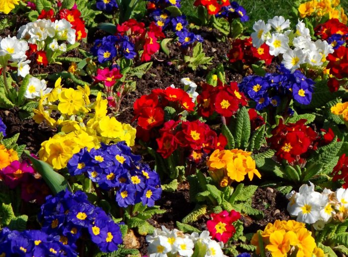 Life to your front yard with colorful flowers