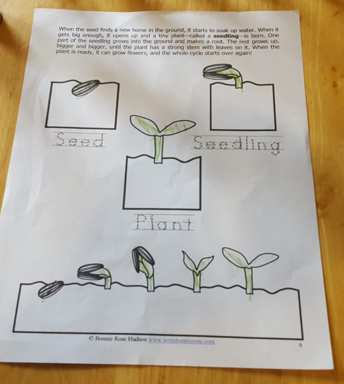 Review of WriteBonnieRose Science Collection Level 1 Plants worksheet seed seedling plant