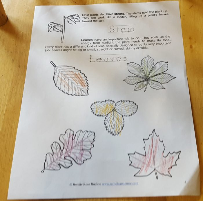 Review of WriteBonnieRose Science Familiar Plants and how they grow Stem Leaves worksheet page 4