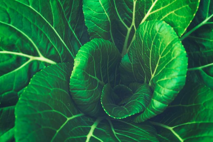 Forager's dream agriculture biology close up of leaves foliage