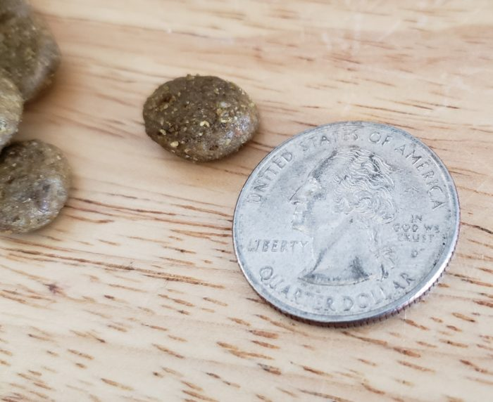 Honest chewy review measuring pieces of dog food against an American quarter coin for sizing