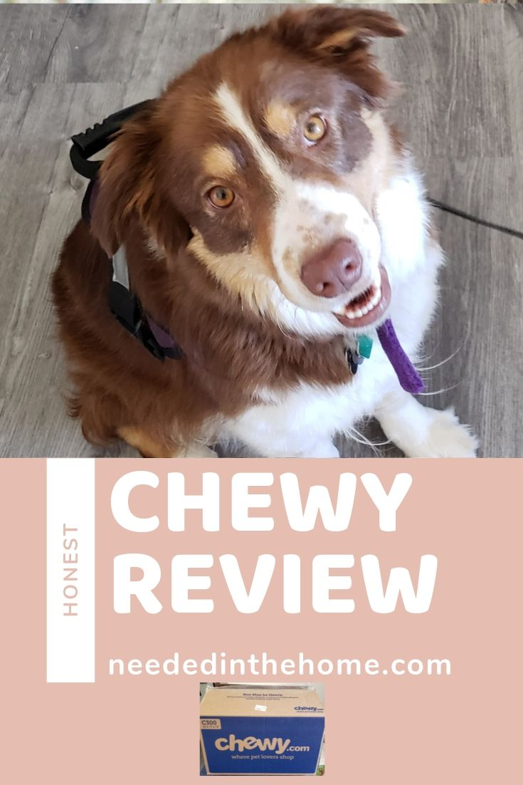 Honest chewy review chocolate border collie chewy box neededinthehome