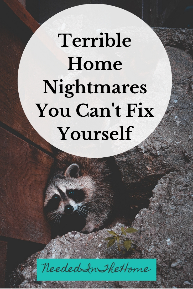Terrible Home Nightmares You Can't Fix Yourself raccoon in foundation of house neededinthehome