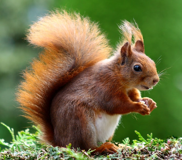 Home nightmares you can't fix rodent invasion squirrel