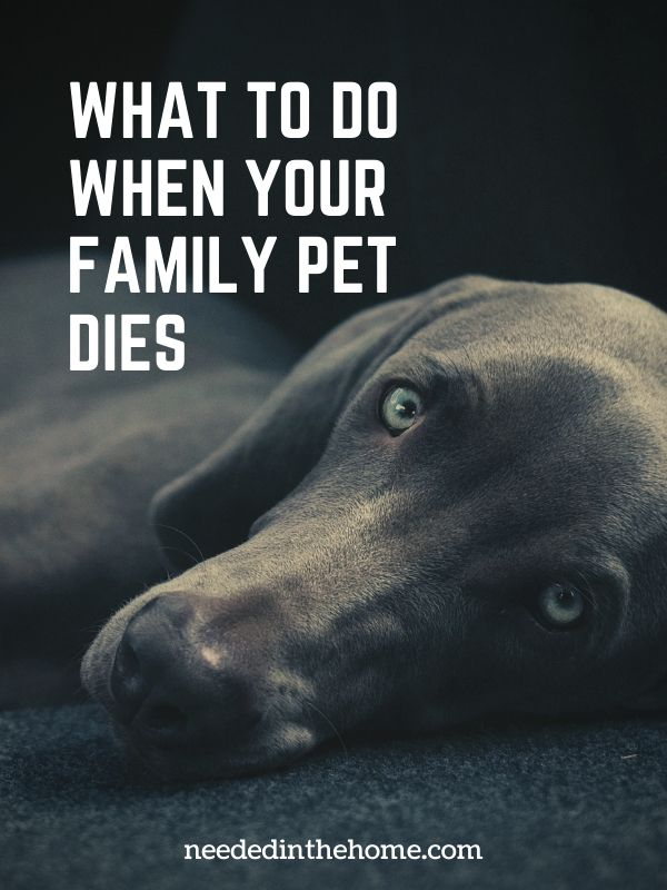 What to do when your family pet dies old dog looking sorrowful neededinthehome