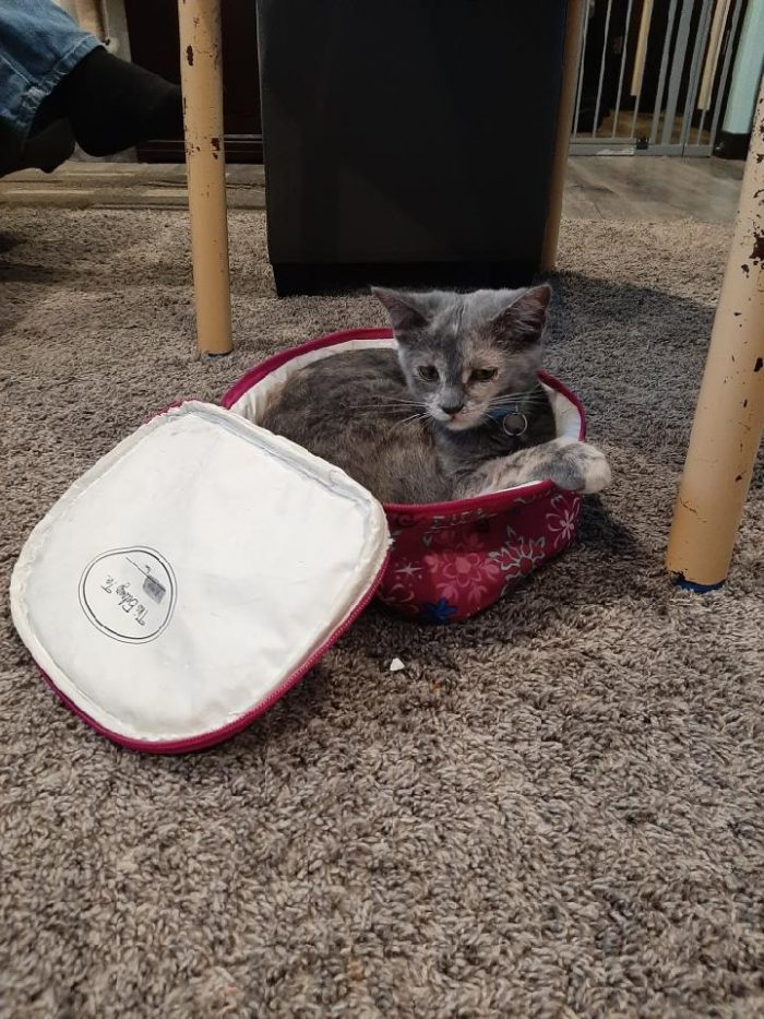 Product Review of Okaysou Air Purifier AirMic4S kitten in a zippered lunch bag