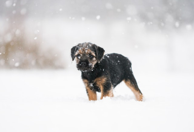 Is your home prepared for weather changes small dog in snow