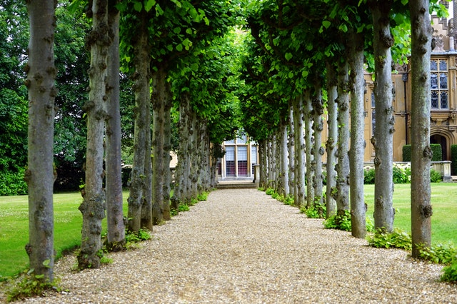 Updates to make to your outdoor space trees lining a path to doorway