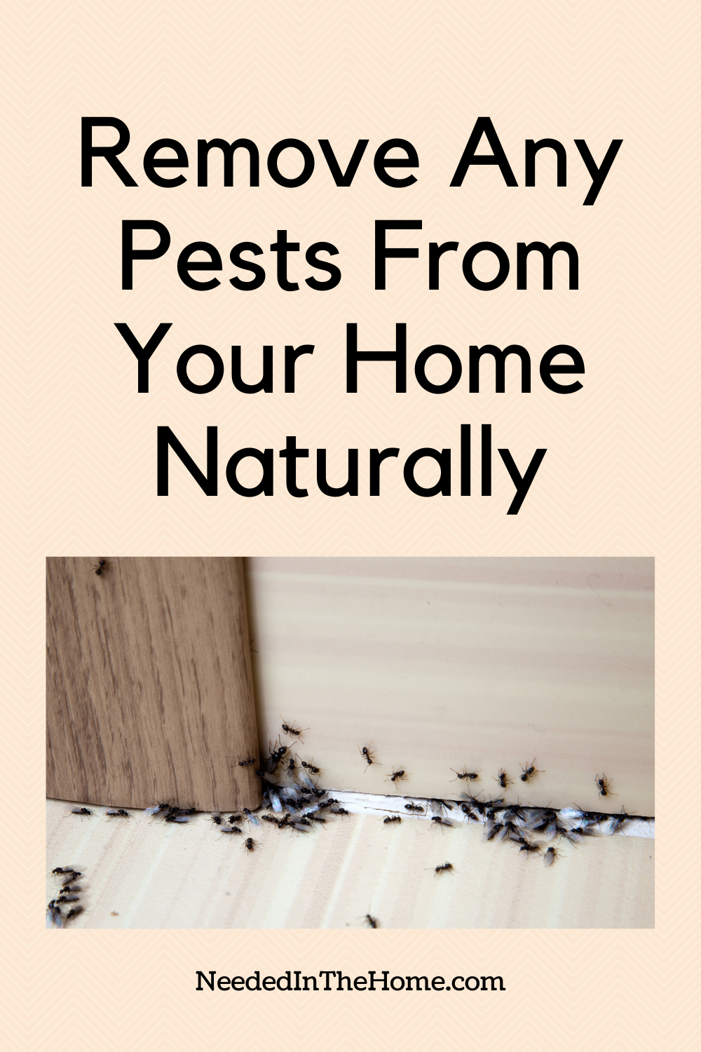 pinterest-pin-description remove any pests from your home naturally ants crawling on wall floor neededinthehome